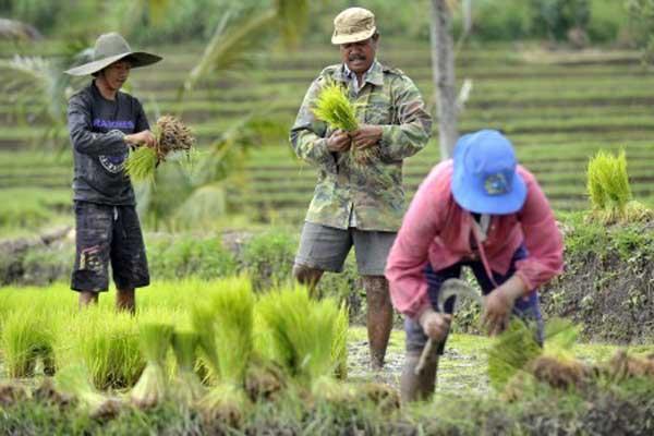 Sensus Ekonomi 2016 Jumlah Usaha Non Pertanian 267 Juta Peragi